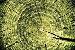 美妙的树桩纹理 免版税库存照片