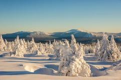 美妙的森林冬天 库存图片