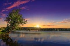 美妙的横向 庄严日落 在森林湖银行的一棵树在水中反射了 图库摄影