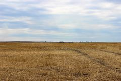 美妙的横向 老鹰和大黄色麦田在收获和阴沉的天空以后的在背景中 库存图片