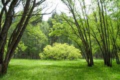美妙的沼地在春天森林里 免版税库存图片