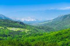 美妙的浪漫夏天下午风景全景 绿化,在峡谷高原鲜绿色谷  落叶林巴斯卡 免版税库存图片