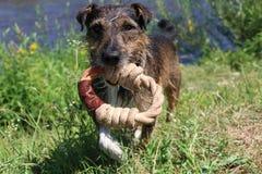 美妙的狗 免版税库存照片