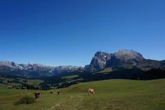 美妙的田园诗全景阿尔卑斯和山在白云岩和清楚的蓝天 免版税库存图片