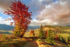 美妙的秋天山坡在特兰西瓦尼亚 库存照片