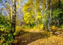 美妙的秋天车道在森林里 免版税库存照片
