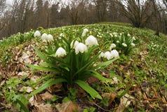美妙的第一朵春天花 免版税图库摄影