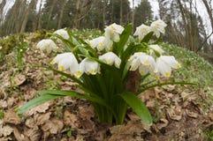 美妙的第一朵春天花 免版税库存照片