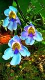 美妙的花三胞胎  免版税库存照片