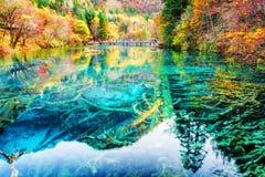 美妙的被淹没的树干在五Flower湖的水中 库存图片