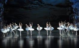 美妙的跳舞天鹅芭蕾天鹅湖 库存图片