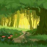 美妙的鲜绿色的夏天不可思议的森林传染媒介背景采蘑菇 库存图片