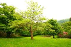 美妙2个庭院的春天 免版税图库摄影