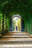 美泉宫在维也纳,形成金合欢的一个绿色隧道浪漫庭院走道在Vienn 图库摄影