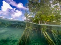 美洲红树库拉索岛景色 免版税库存图片