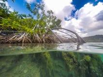 美洲红树库拉索岛景色 免版税图库摄影
