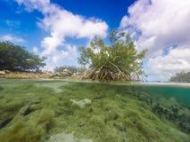 美洲红树库拉索岛景色 免版税库存照片
