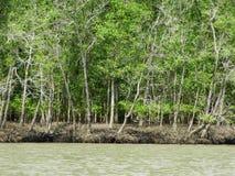 美洲红树树在水, Bako国家公园中 沙捞越 自治市镇 马来西亚 免版税库存图片