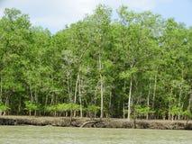 美洲红树树在水, Bako国家公园中 沙捞越 自治市镇 马来西亚 免版税库存照片