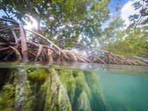美洲红树根源库拉索岛景色 免版税库存图片