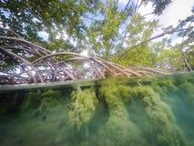 美洲红树根源库拉索岛景色 免版税图库摄影