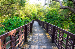 美洲红树桥梁 免版税库存照片