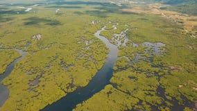 美洲红树森林在亚洲 菲律宾Siargao海岛 免版税库存图片
