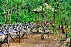 美洲红树森林木板条桥梁观测所在婆罗洲马来西亚的雨林里 免版税图库摄影