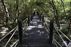 美洲红树森林木板走道 免版税库存照片
