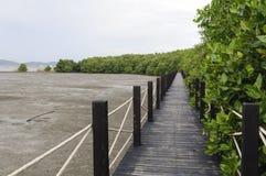 美洲红树森林木板走道 免版税库存图片