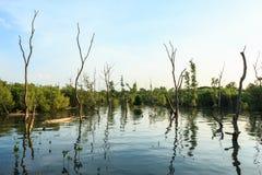 美洲红树森林 免版税图库摄影