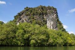 美洲红树沼泽和石头山 免版税库存图片