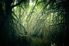 美洲红树雨林斯里兰卡神奇风景  库存图片