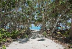 美洲红树:向奥秘海岛海滩的道路 免版税库存图片