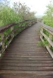 美洲蛇鸟木板走道线索 免版税图库摄影