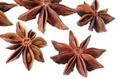 美洲黑杜鹃种子 免版税库存图片