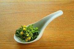 美食的沙拉 免版税图库摄影