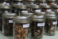 美食的蘑菇 免版税库存照片
