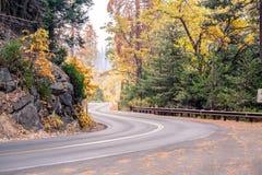 美洲杉国家公园路 加利福尼亚,美国 免版税库存照片