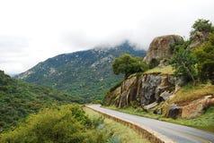 美洲杉国家公园,加州 库存照片