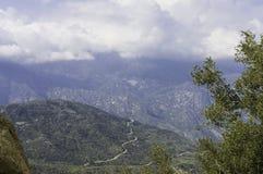 美洲杉国家公园,风景路 免版税库存照片