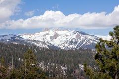 美洲杉国家公园- Great Western分界 库存照片