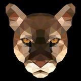 美洲狮的多角形面孔 图库摄影