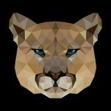 美洲狮的多角形面孔 库存照片