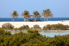 美洲红树和棕榈树在巴尼Yas先生海岛,阿拉伯联合酋长国上 免版税库存图片
