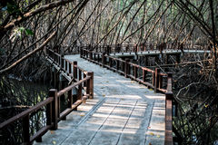美洲红树木板走道 免版税图库摄影