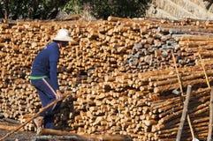 美洲红树木炭做 库存照片