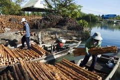 美洲红树木炭做 库存图片