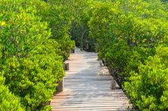 美洲红树桥梁 库存照片