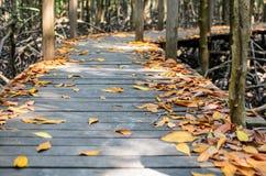 美洲红树桥梁 图库摄影